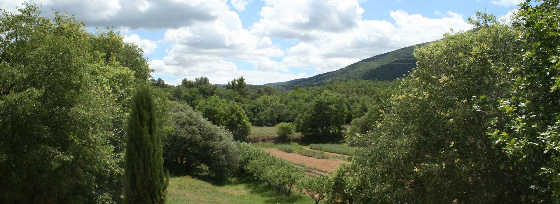 Provence - Le Catalan
